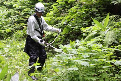 やまがた絆の森 夏季イベント