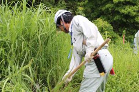 南陽「草木の森」平成29年度夏季イベント