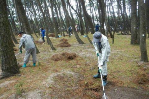 虹の松原保全活動