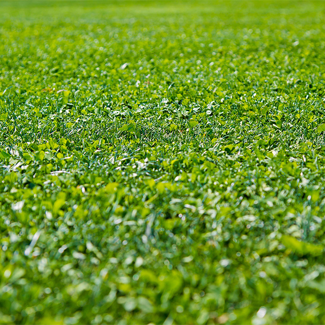 緑化関連技術