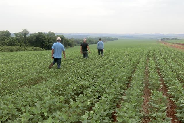 JICA パラグアイ共和国 高濃度フルボ酸を利用した農地改善事業